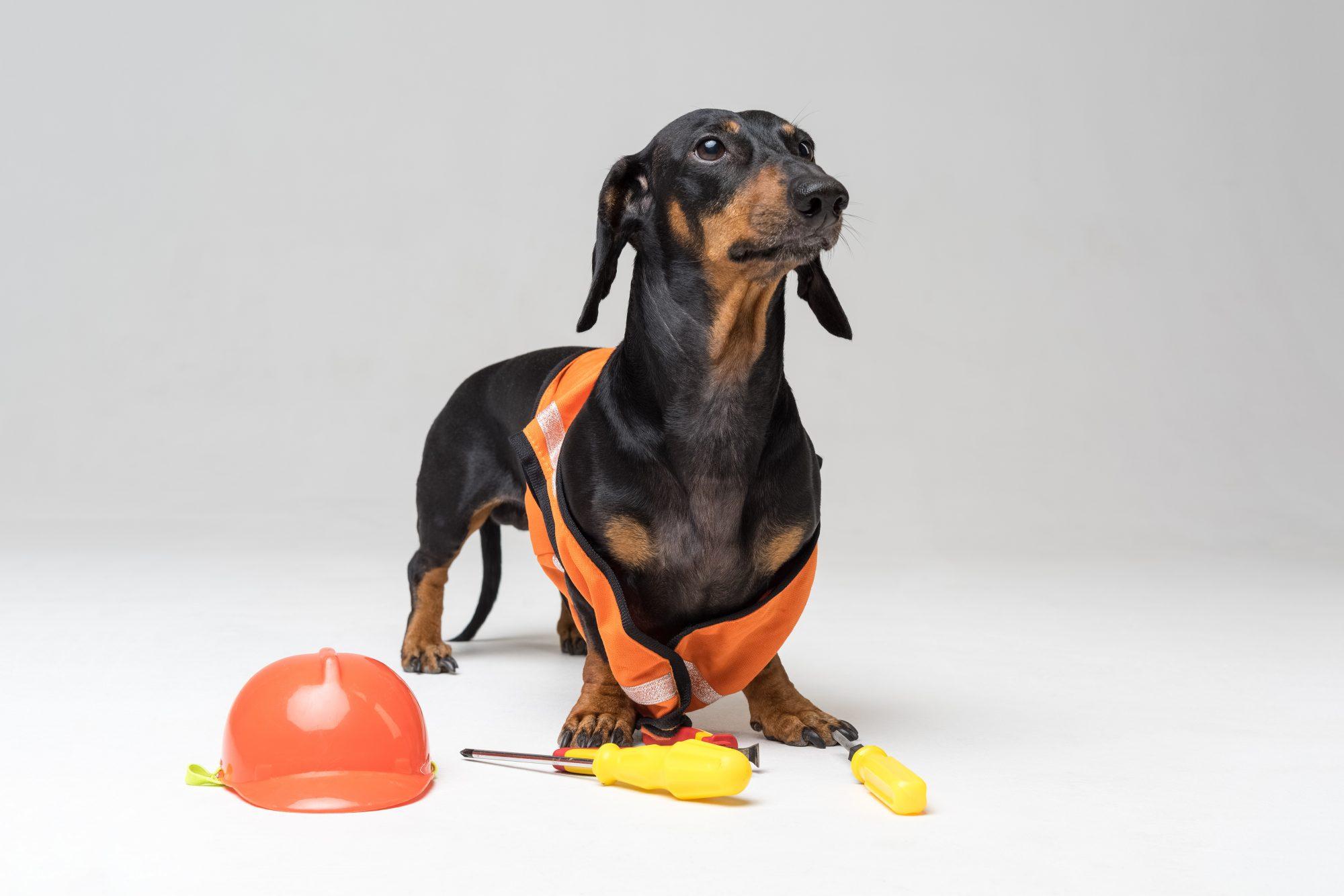 Ley de Tenencia Responsable de Mascotas y Animales de Compañía en la ...
